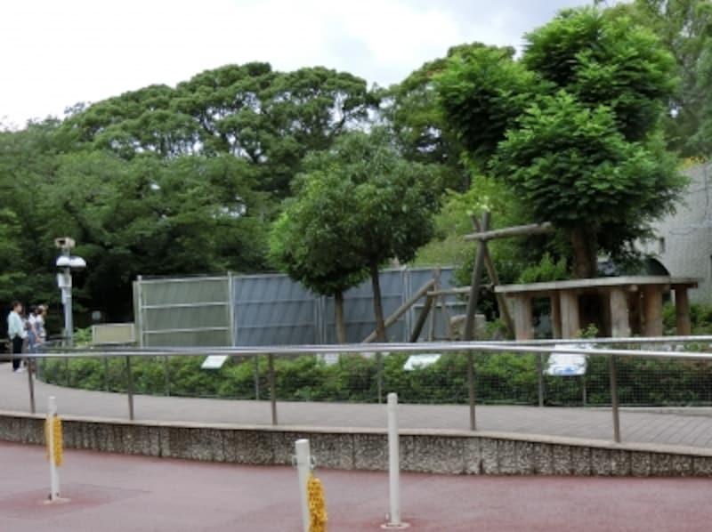 王子動物園パンダ屋外運動場