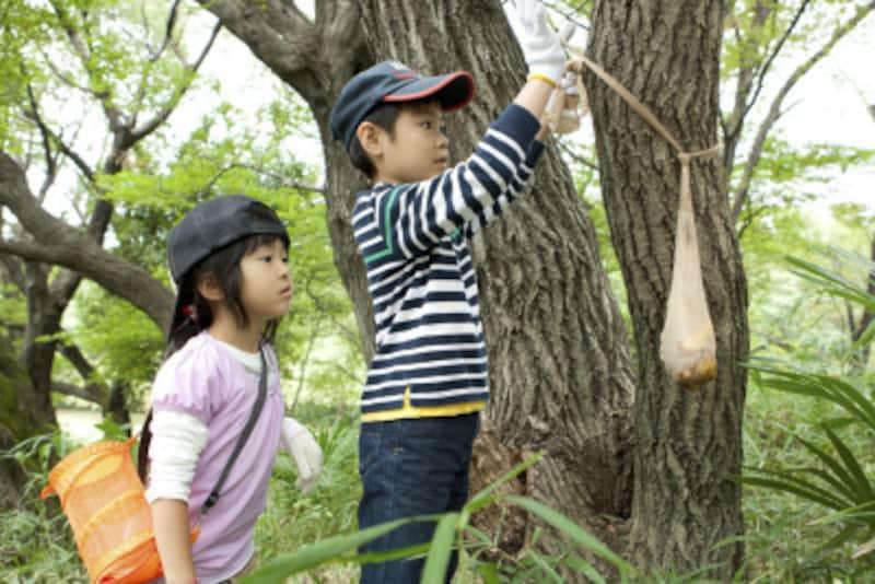 ストッキングにミツ&バナナを入れて、木に吊るす
