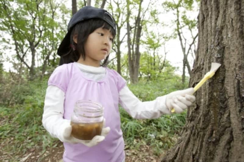 秘密のミツを木にぬる。樹液っぽく、やや厚めにぬるのがコツ!
