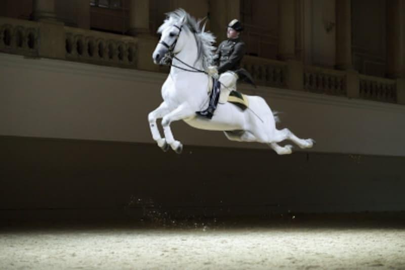 馬のジャンプ技