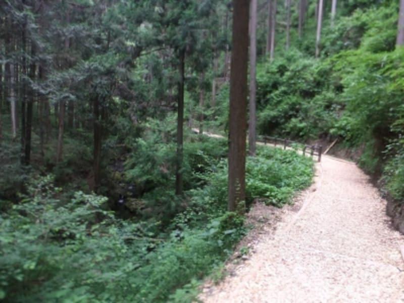 払沢の滝への遊歩道