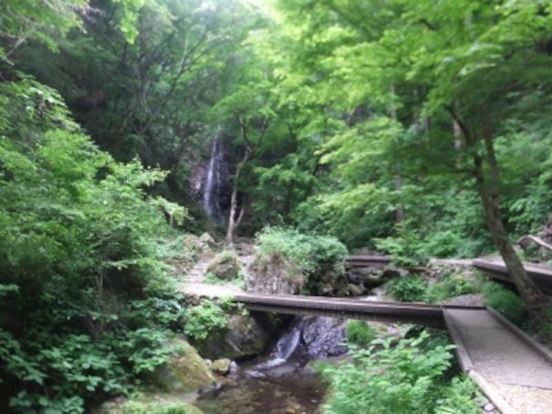 払沢の滝(1)