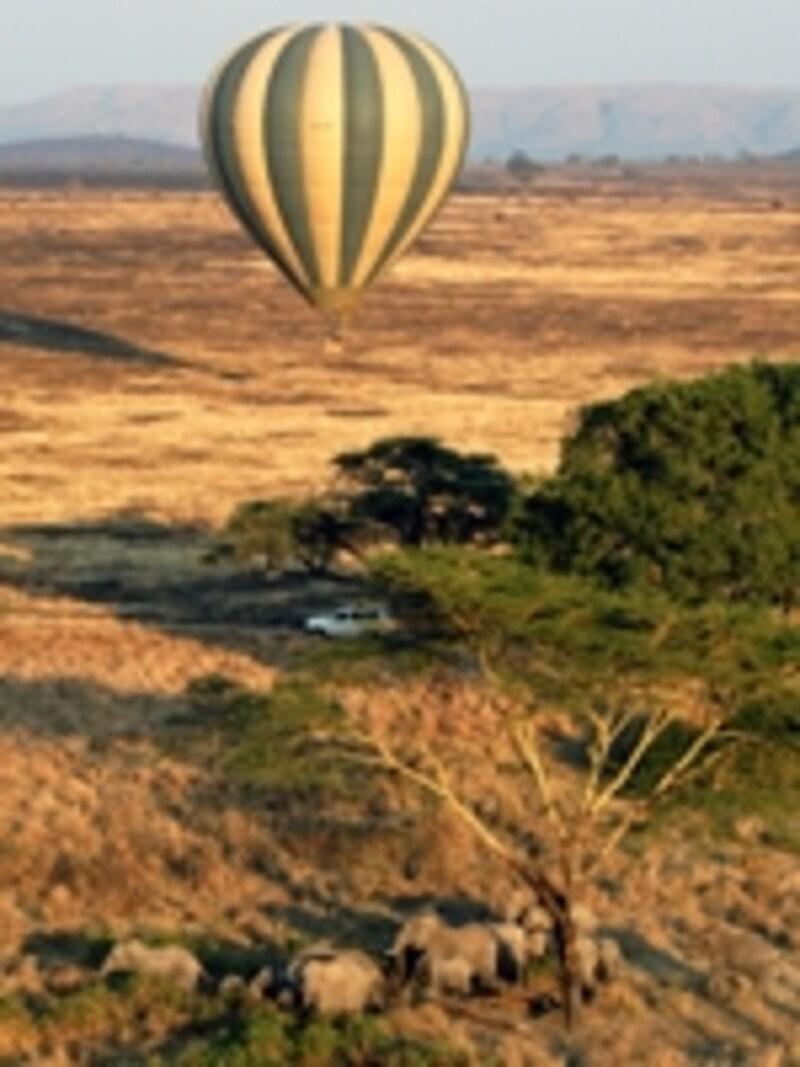 ゾウを追うバルーン。空からなら障害物に邪魔されることも少ない©リゾートアンドサファリ