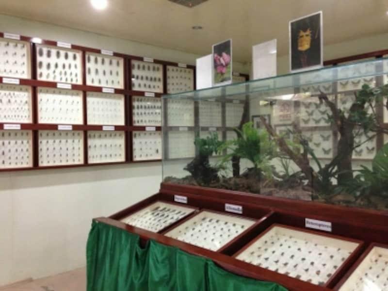 標本展示室
