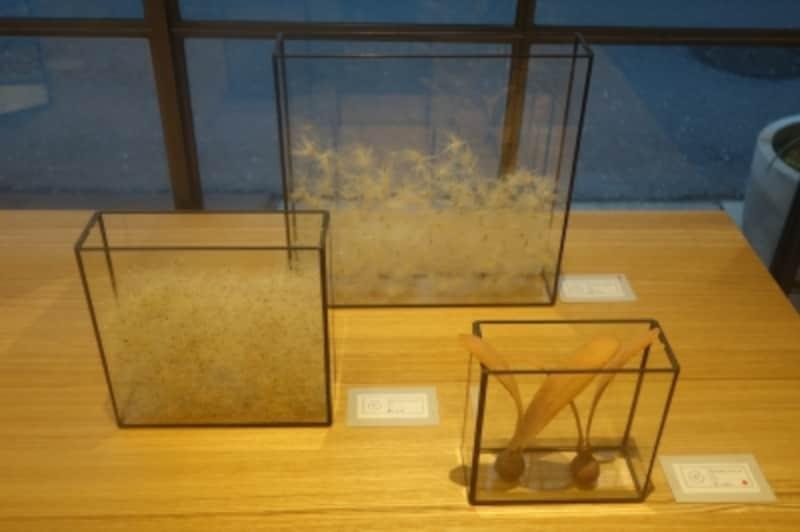 植物が入ったガラスのオブジェ。前回展示していたRARIYOSHIOさんとのコラボ作品。