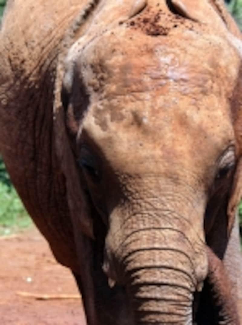 elephantbaby