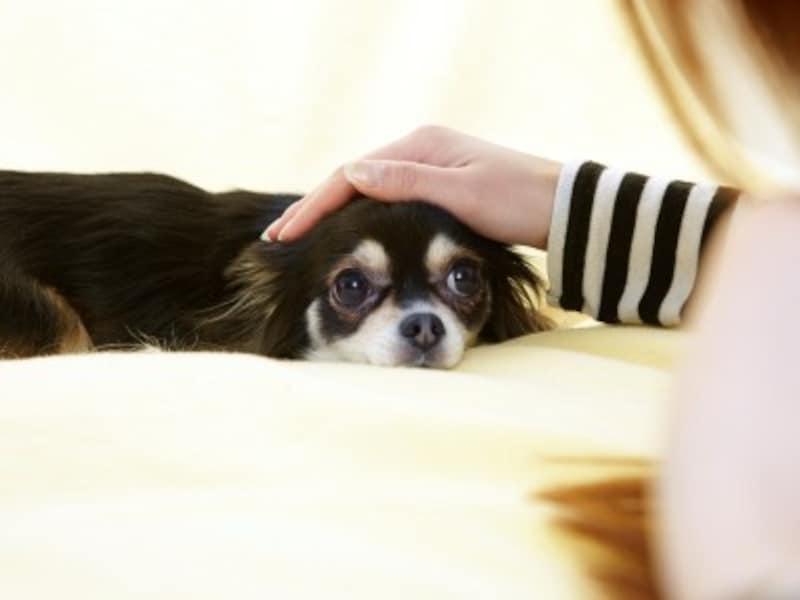 犬は飼い主に従順です。いつだってあなただけを愛し追いかけてきます。だけど人間は思い通りにはなりません。恋人はペットではないのです。