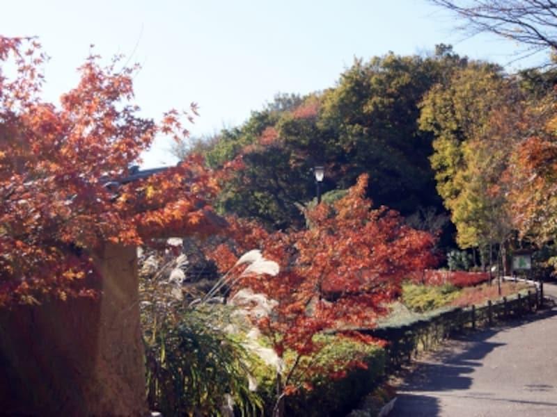 鎌倉中央公園バス停付近の紅葉