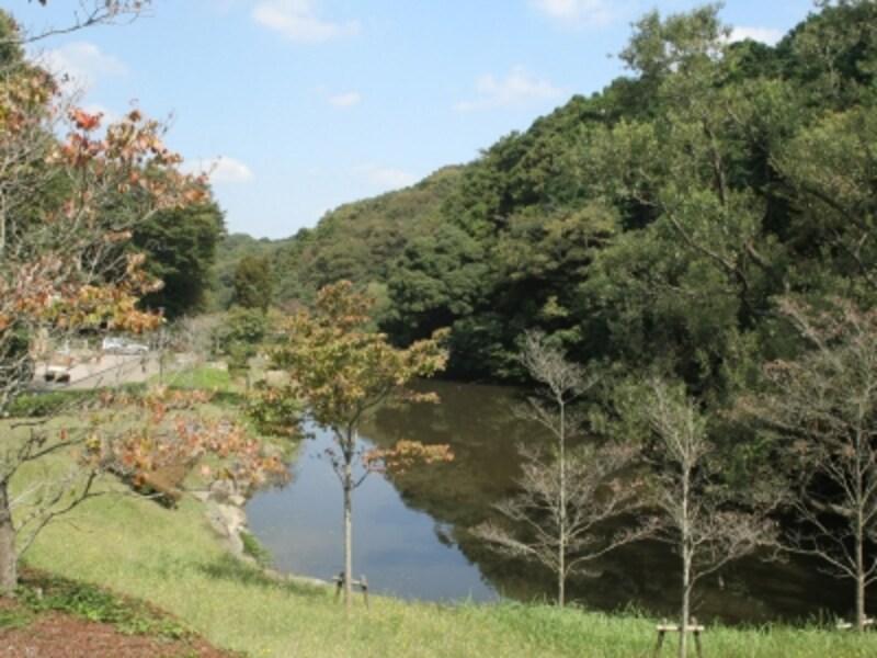 「上の池」。かつての田んぼのため池跡