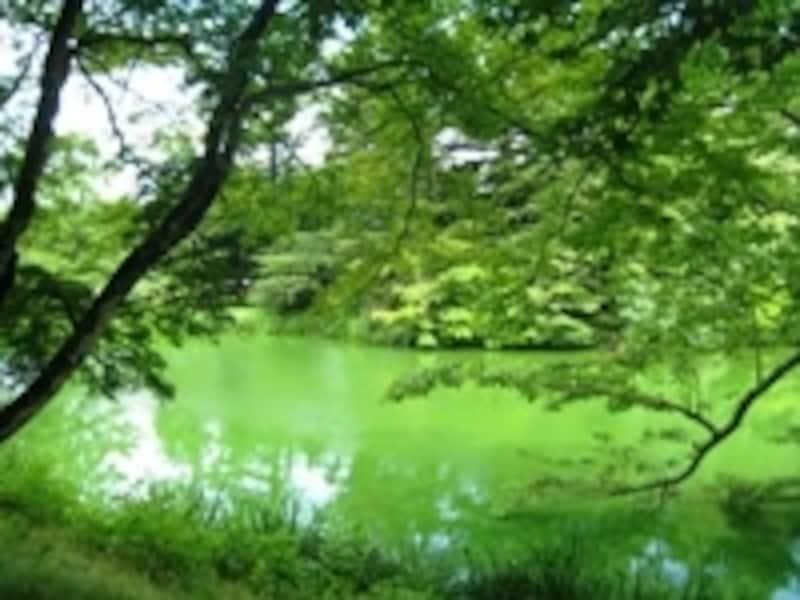 新緑から夏にかけてが軽井沢でもっとも美しい季節