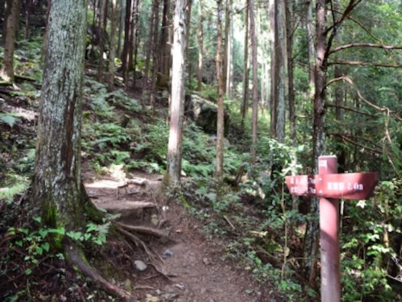 木立の中の道を歩いて