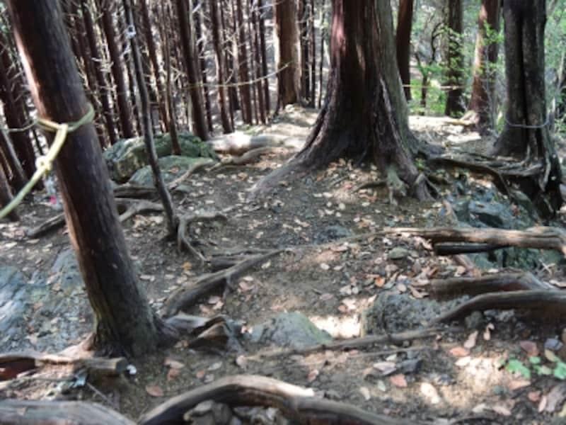 木の根でできた天然の階段をロープにつかまりながら下りる