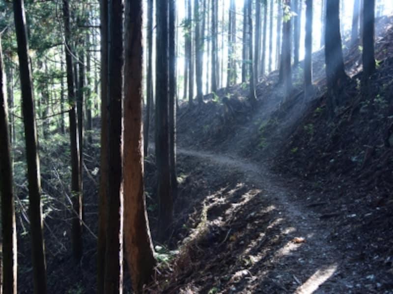 木漏れ日の中を歩く