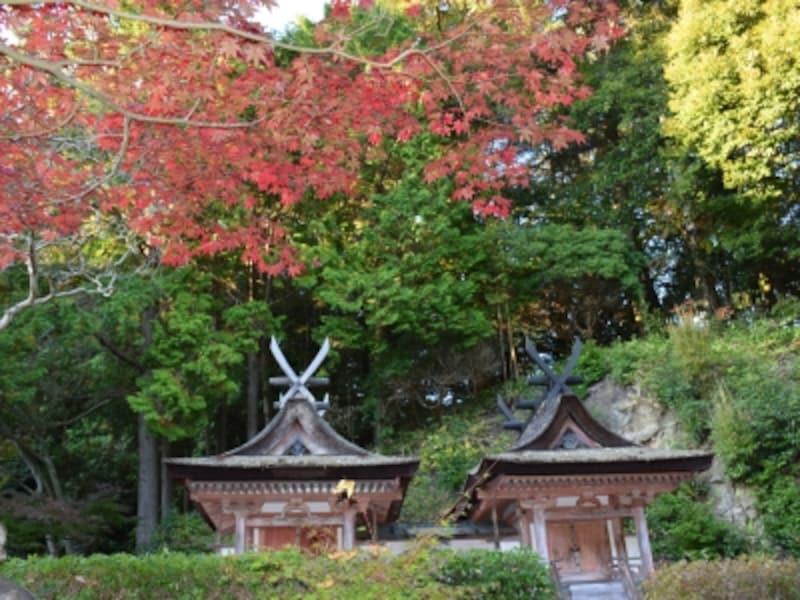 円成寺境内の春日堂・白山堂(国宝)と紅葉