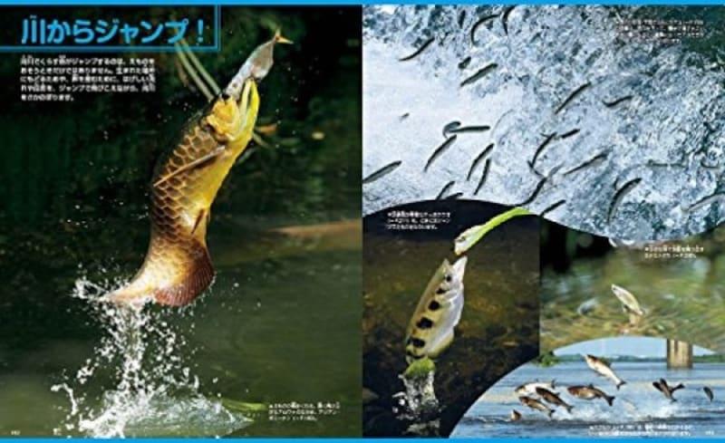 小学生の図鑑ランキング第8位『魚新訂版』(講談社の動く図鑑MOVE)