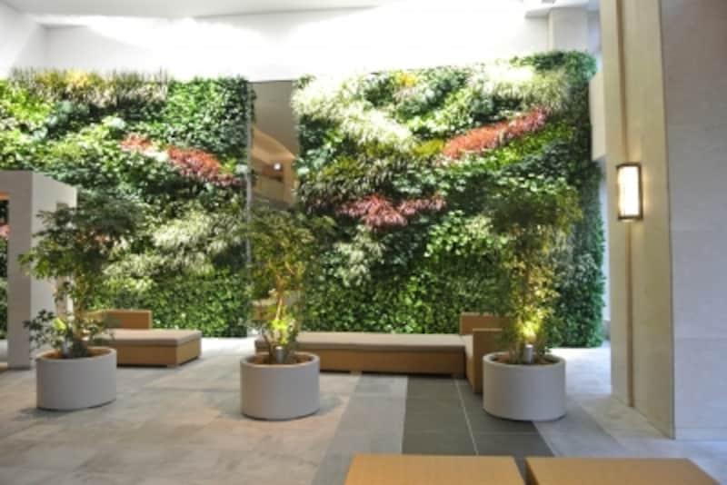 エントランスホールの壁面緑化
