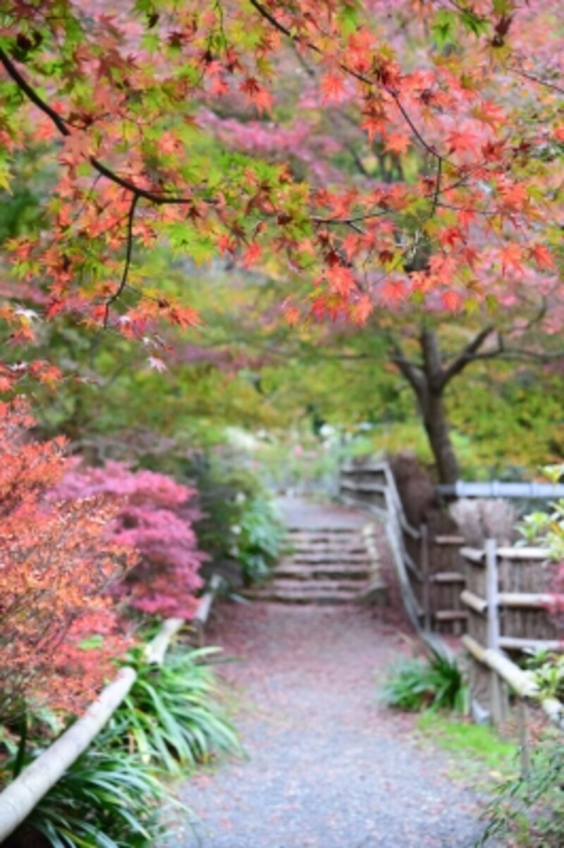 北嵯峨の竹林に囲まれた、小さなお寺「直指庵」