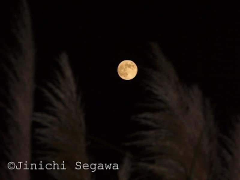 お月見撮影