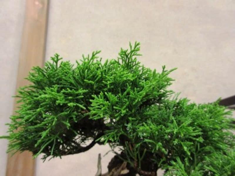 特に木の頭頂部はよく伸びます