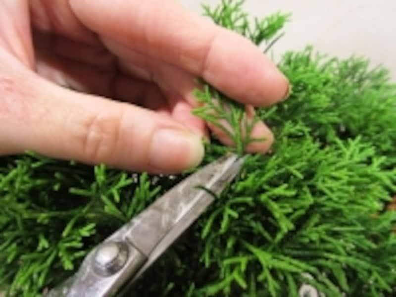 葉の軸を切る