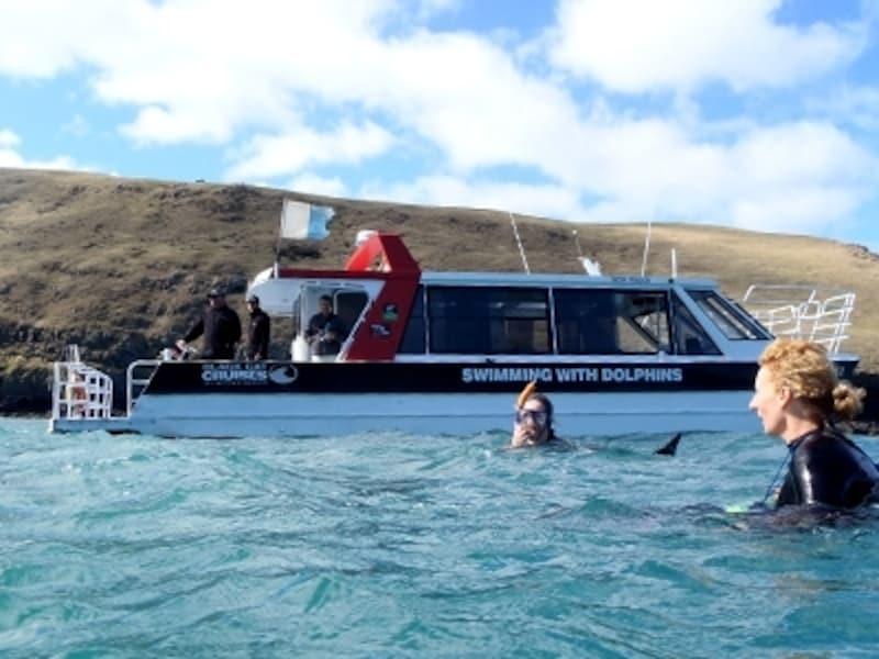 すぐ目の前をイルカが泳いでいく感動体験!