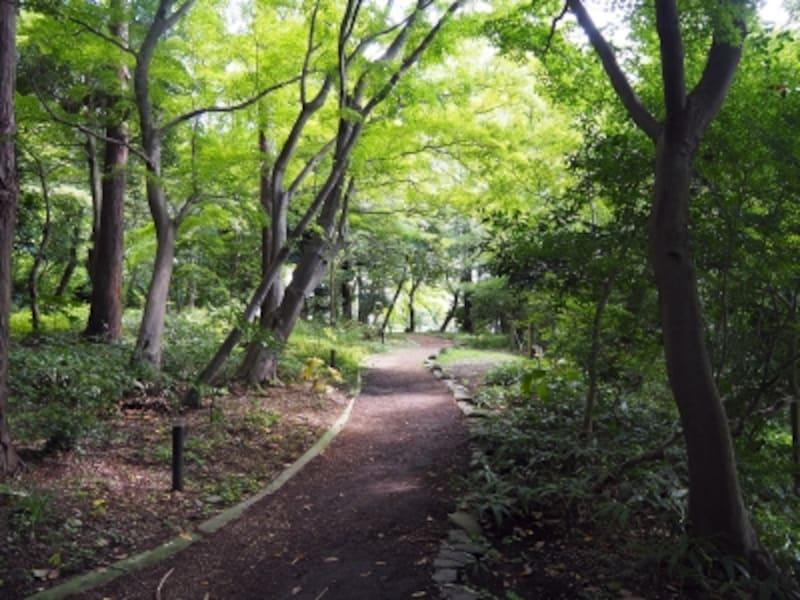 本多の森公園