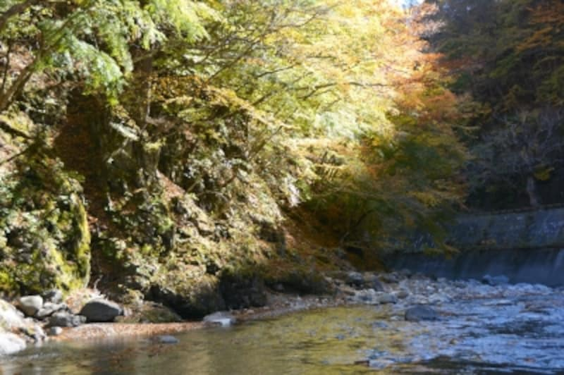 相原橋の河原に迫る紅葉