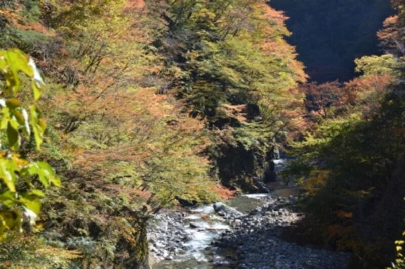 ヤトウロクの渓谷の紅葉