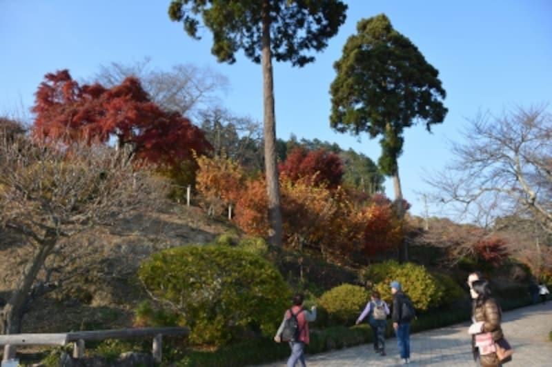 宝登山山頂の紅葉