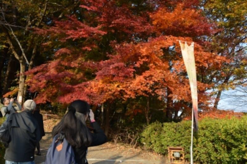 誰もが立ち止まってカメラのシャッターを切る宝登山坂道のモミジ(2014年11月24日撮影)