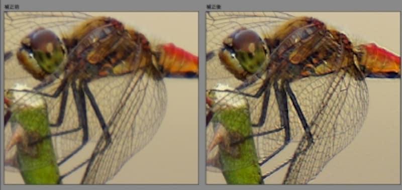 「ぶれの軽減」による左が補正前、右が補正後。羽や細かい毛の描写がくっきりと補正されています。