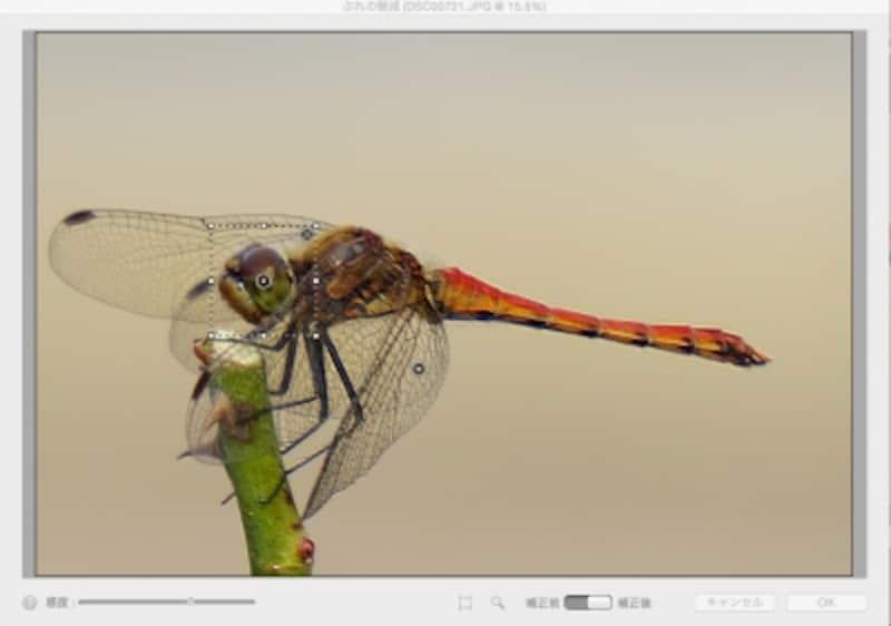 トンボの目と羽の2カ所にぶれの解析領域を配置して、それぞれに調整をして最適化しています。