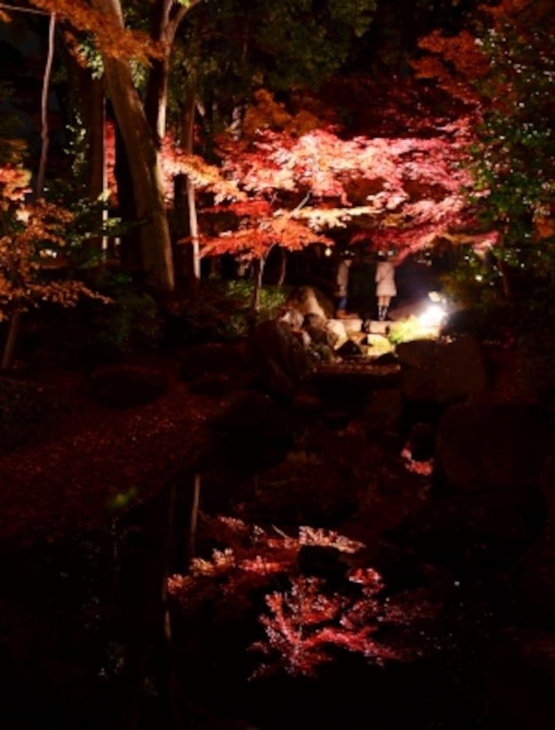 風情ある日本庭園の紅葉