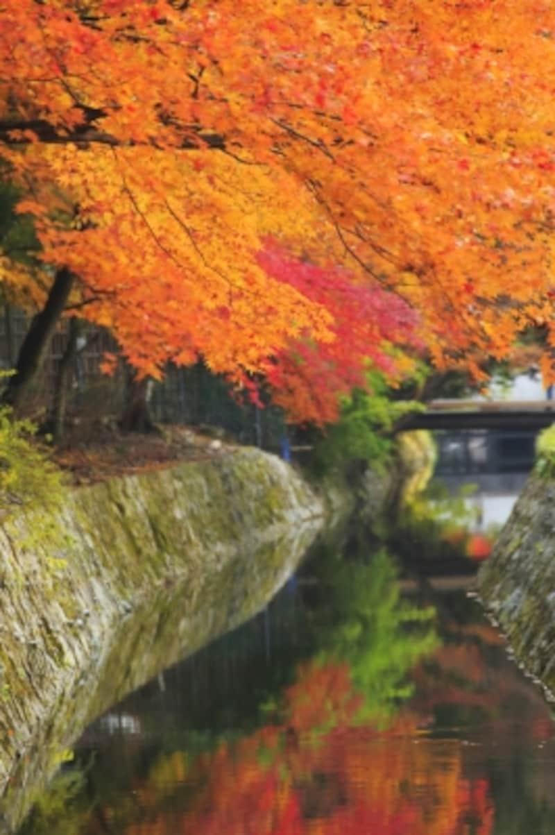 秋の「哲学の道」undefined美しく色付いた紅葉