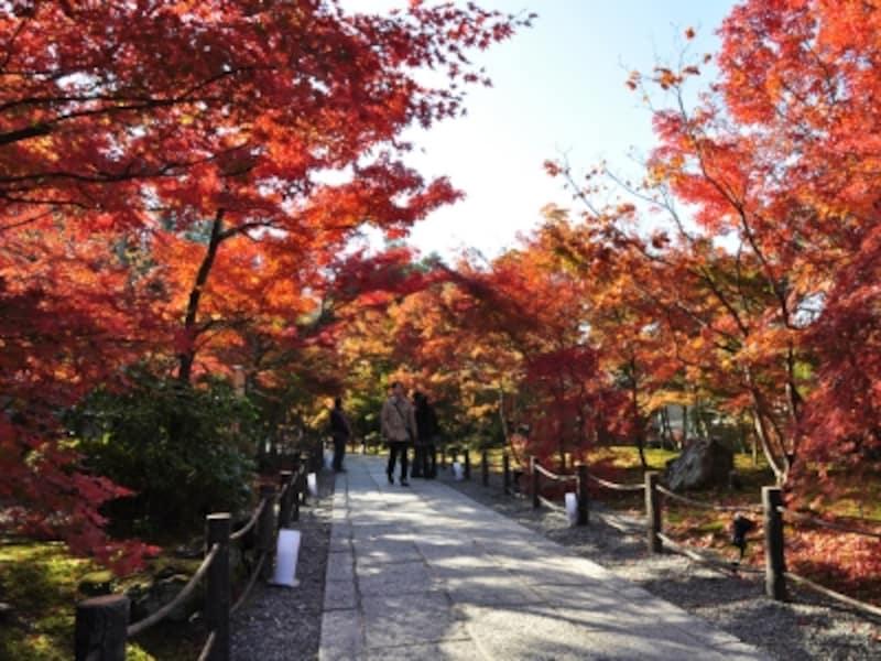「もみじの永観堂」と呼ばれる京都有数の紅葉の名所