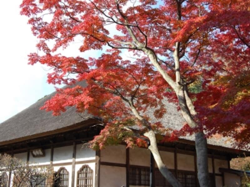 円覚寺境内の「選仏場」と紅葉(2007年12月1日撮影)