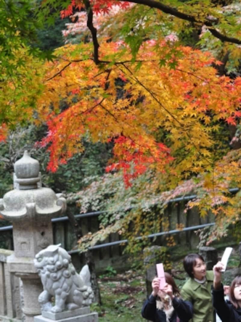 建長寺境内の「半僧坊道」周辺の紅葉(2009年11月29日撮影)