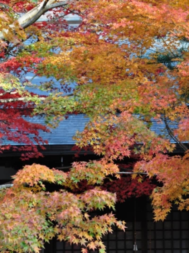 鎌倉の紅葉穴場スポット、覚園寺(2008年11月29日撮影)