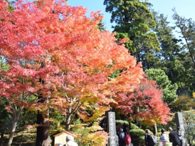 円覚寺総門前の紅葉(2014年11月27日撮影)
