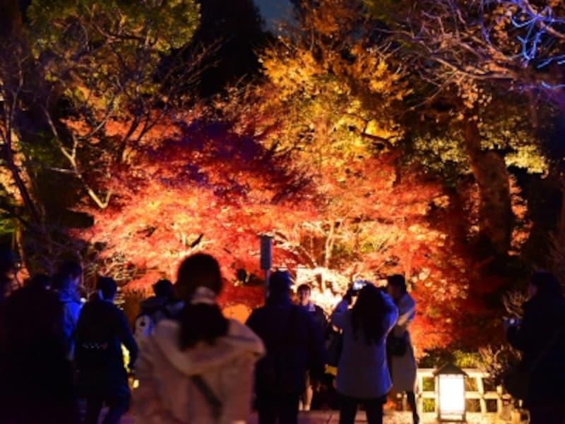 長谷寺の紅葉ライトアップ(2016年12月8日撮影)