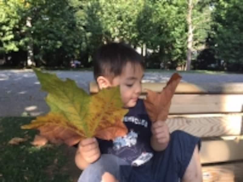葉っぱを持つ幼児