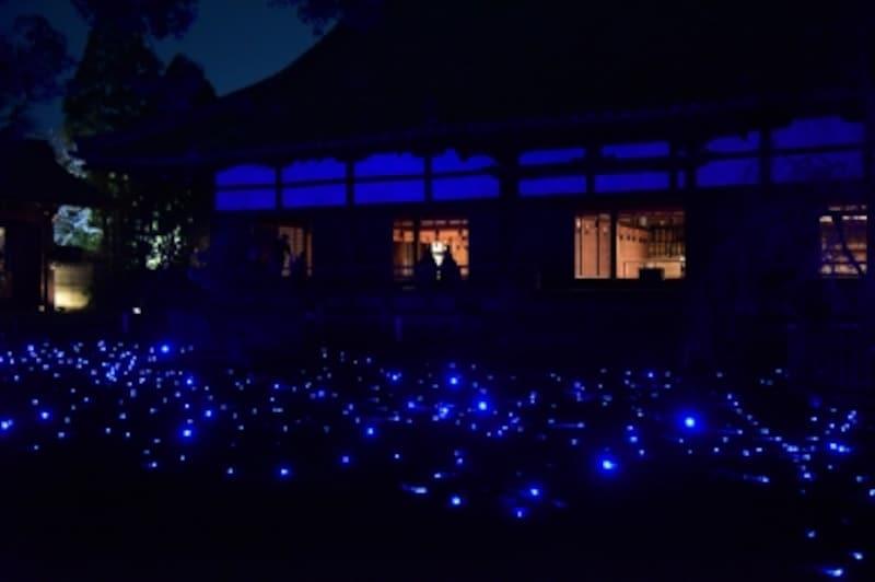 青蓮院の青色LEDの光を用いたライトアップ