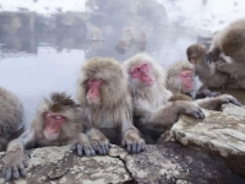 冬場になると温泉に猿が浸かる、地獄谷野猿公苑(長野県)