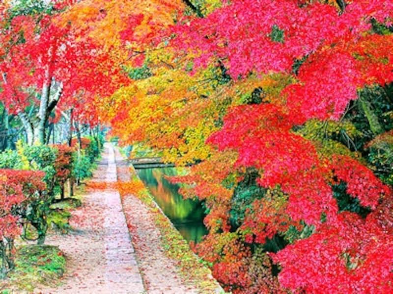 紅葉の哲学の道(京都市)
