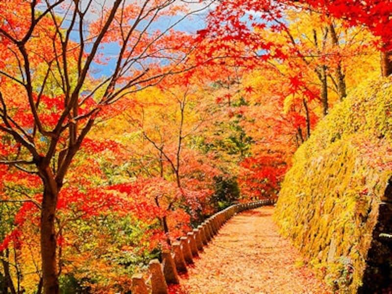 野山、高城山の紅葉