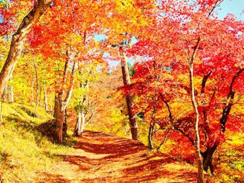 最上山公園もみじ山の紅葉