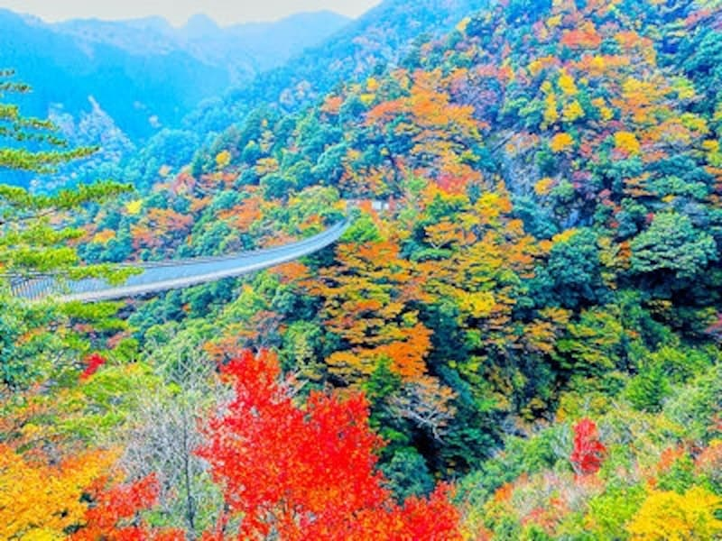 五家荘、梅の木轟公園吊橋の紅葉