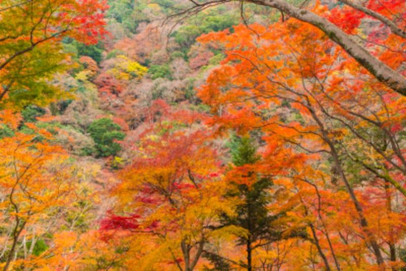 西日本の紅葉名所をご紹介