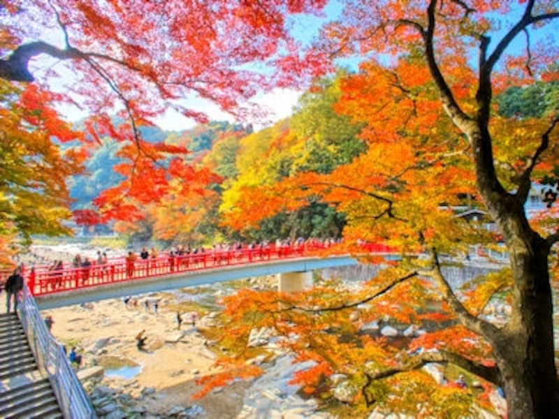 香嵐渓待月橋の紅葉
