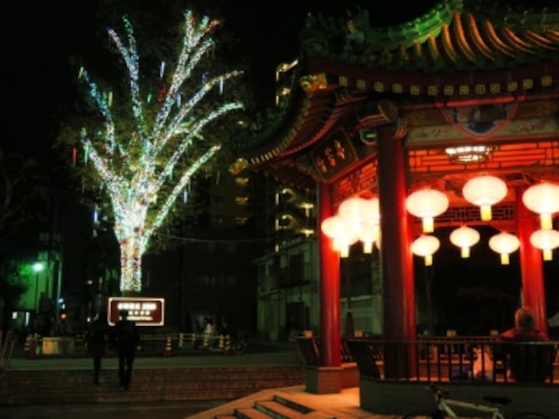 中華街にある山下町公園のご神木もイルミネーションで彩られています(2015年11月20日撮影)